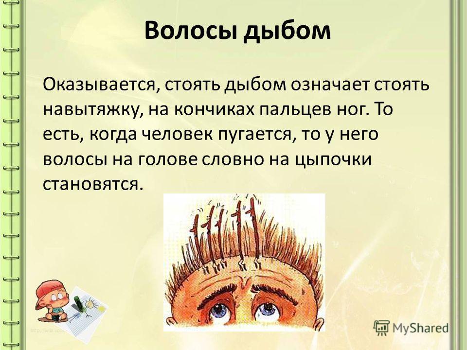 Волосы дыбом Оказывается, стоять дыбом означает стоять навытяжку, на кончиках пальцев ног. То есть, когда человек пугается, то у него волосы на голове словно на цыпочки становятся.