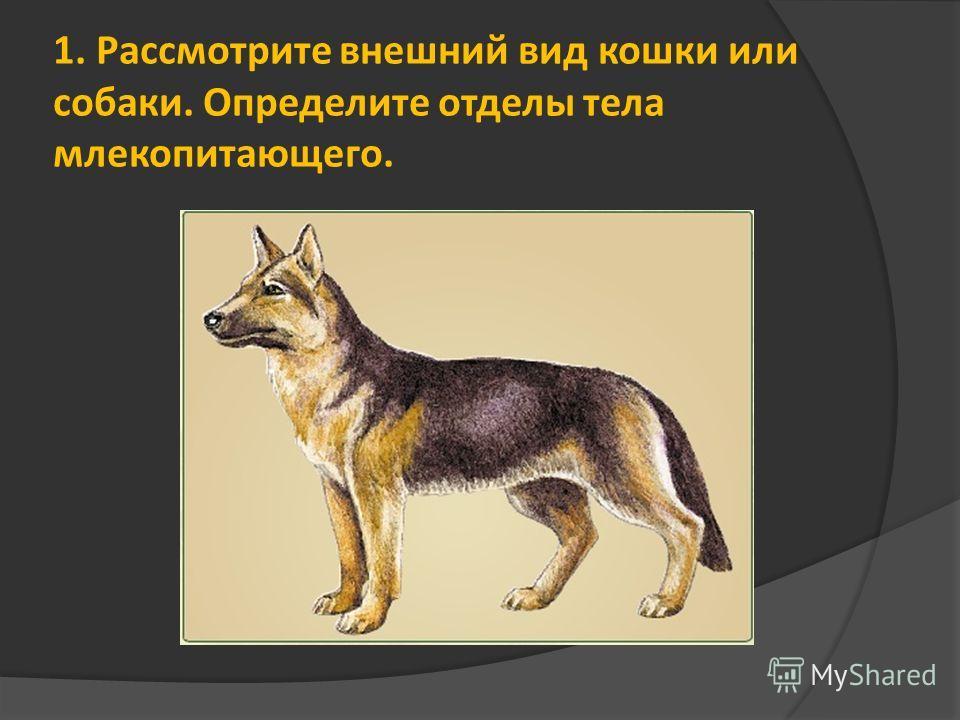 1. Рассмотрите внешний вид кошки или собаки. Определите отделы тела млекопитающего.