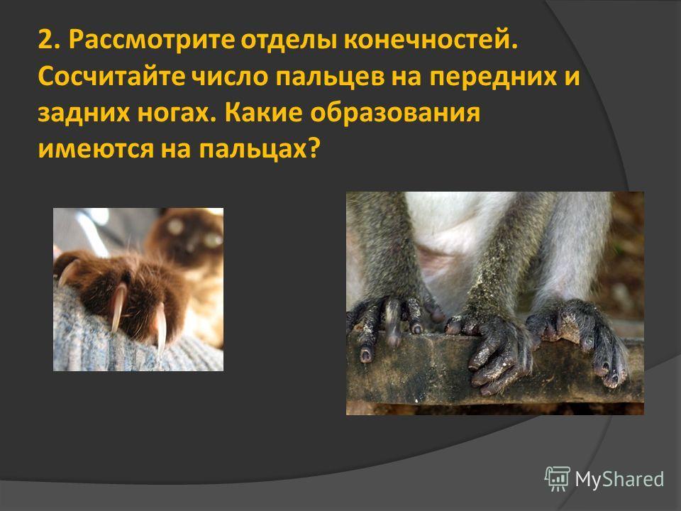 2. Рассмотрите отделы конечностей. Сосчитайте число пальцев на передних и задних ногах. Какие образования имеются на пальцах?
