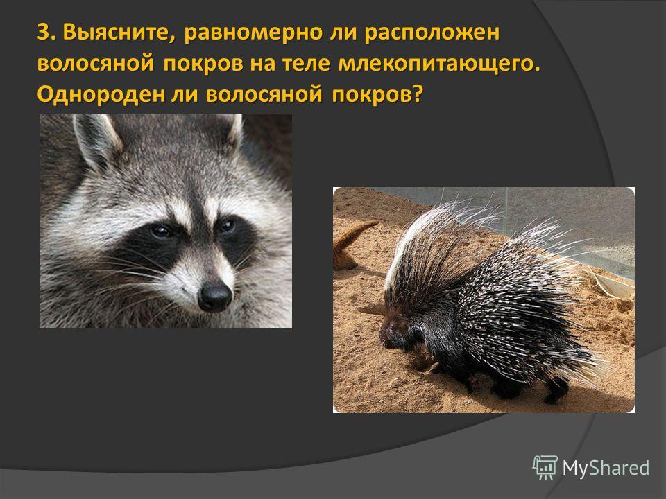 3. Выясните, равномерно ли расположен волосяной покров на теле млекопитающего. Однороден ли волосяной покров?