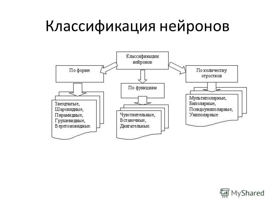 Классификация нейронов