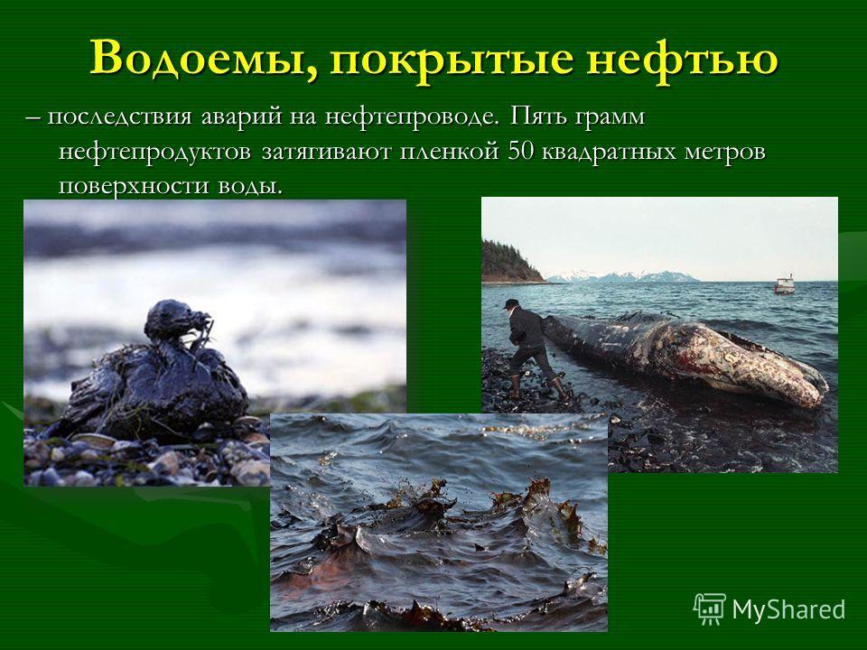Водоемы, покрытые нефтью – последствия аварий на нефтепроводе. Пять грамм нефтепродуктов затягивают пленкой 50 квадратных метров поверхности воды.