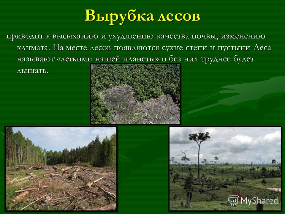 Вырубка лесов приводит к высыханию и ухудшению качества почвы, изменению климата. На месте лесов появляются сухие степи и пустыни Леса называют «легкими нашей планеты» и без них труднее будет дышать.