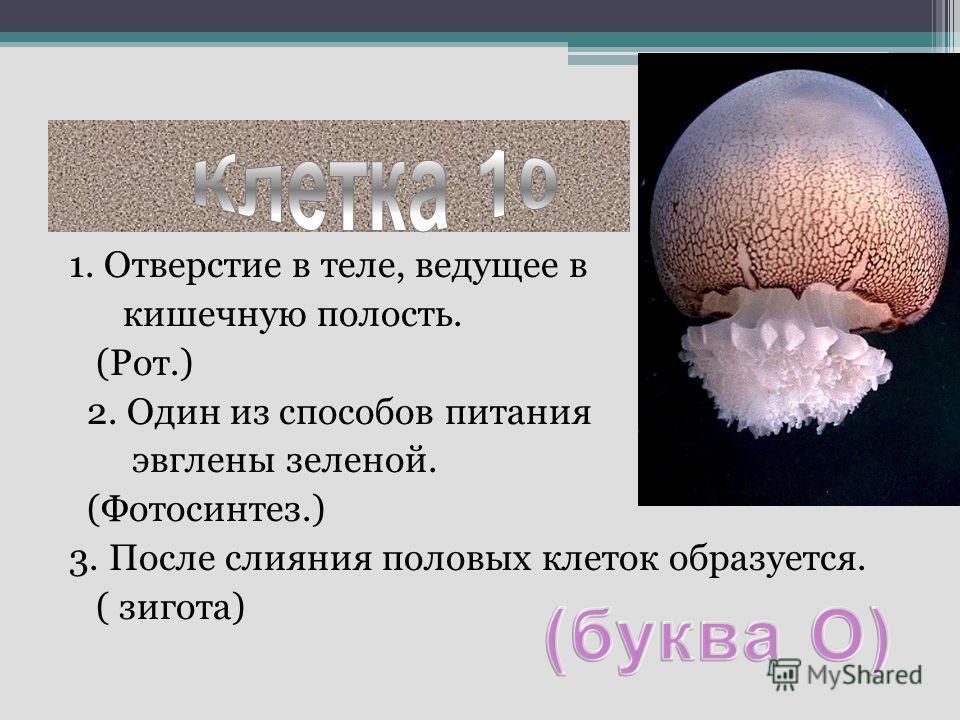 1. Отверстие в теле, ведущее в кишечную полость. (Рот.) 2. Один из способов питания эвглены зеленой. (Фотосинтез.) 3. После слияния половых клеток образуется. ( зигота)