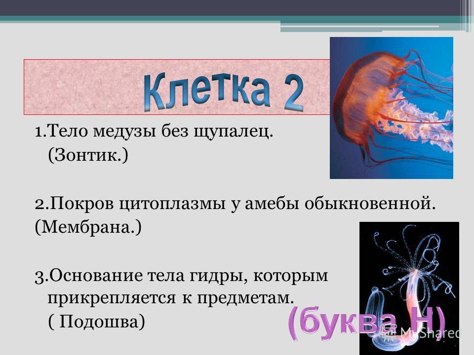 1.Тело медузы без щупалец. (Зонтик.) 2.Покров цитоплазмы у амебы обыкновенной. (Мембрана.) 3.Основание тела гидры, которым прикрепляется к предметам. ( Подошва)