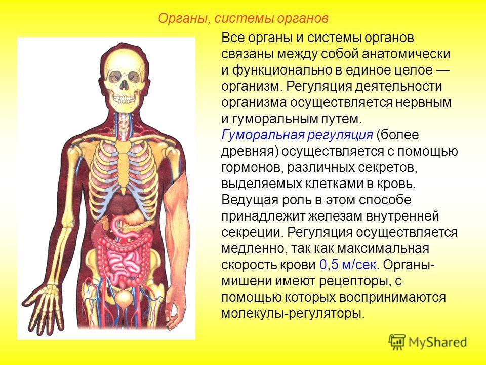Все органы и системы органов связаны между собой анатомически и функционально в единое целое организм. Регуляция деятельности организма осуществляется нервным и гуморальным путем. Гуморальная регуляция (более древняя) осуществляется с помощью гормоно
