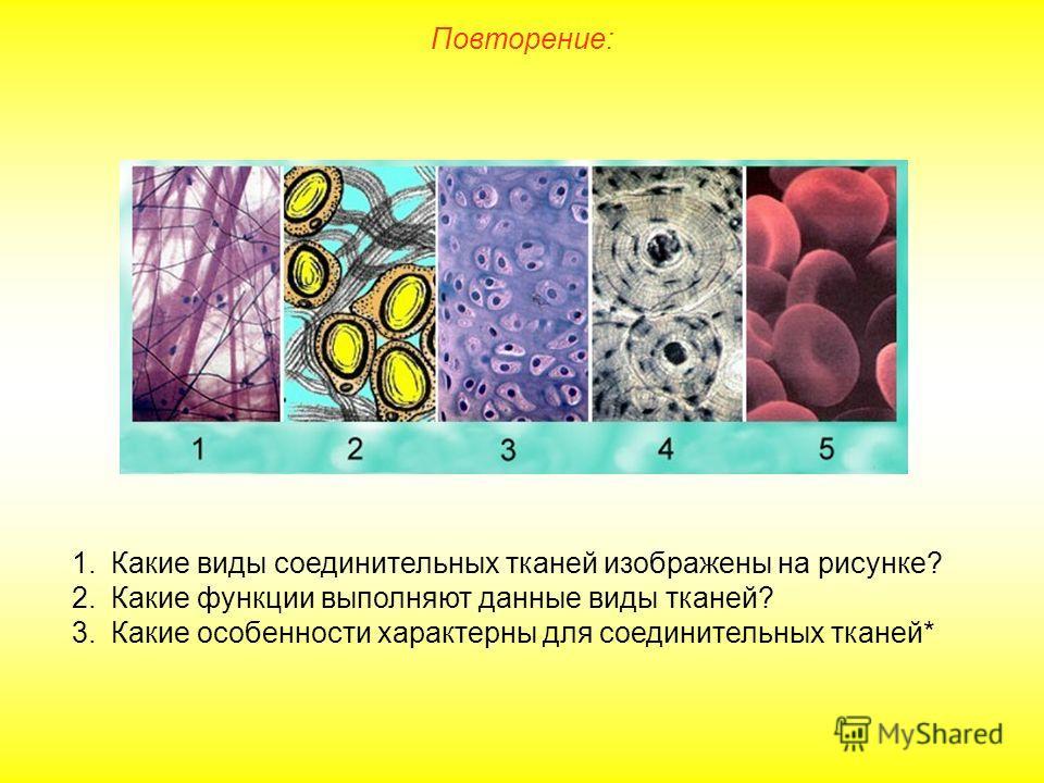 Повторение: 1.Какие виды соединительных тканей изображены на рисунке? 2.Какие функции выполняют данные виды тканей? 3.Какие особенности характерны для соединительных тканей*