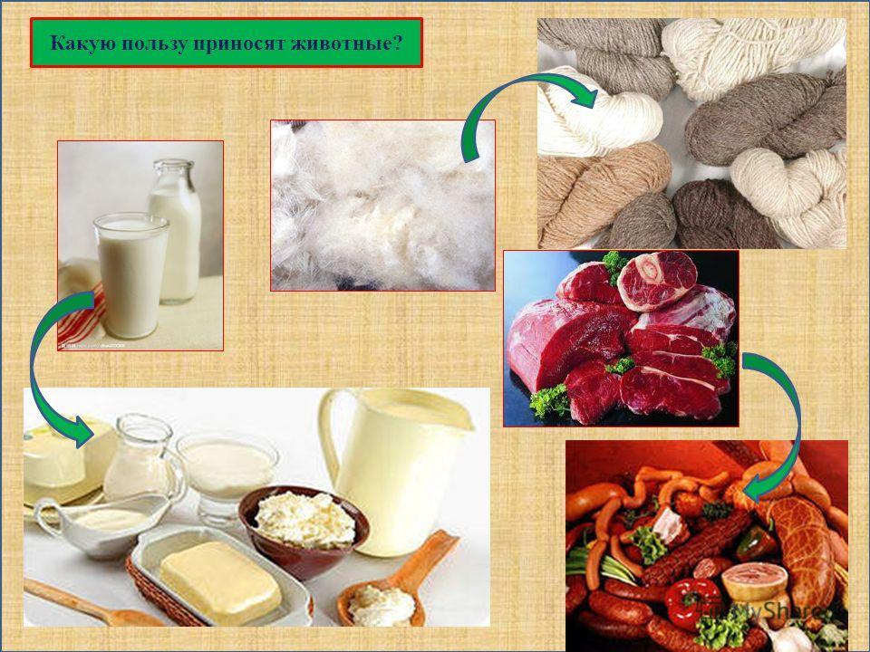 Какую пользу приносят животные?