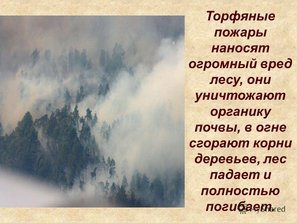 Торфяные пожары наносят огромный вред лесу, они уничтожают органику почвы, в огне сгорают корни деревьев, лес падает и полностью погибает.