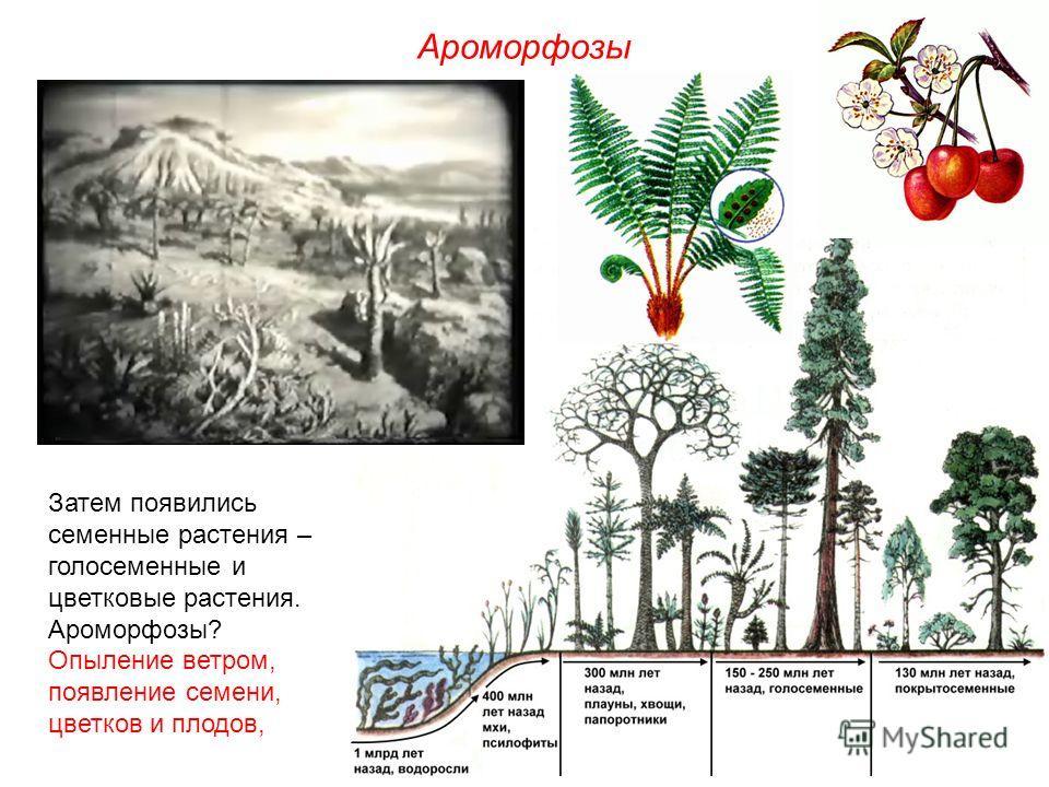 Затем появились семенные растения – голосеменные и цветковые растения. Ароморфозы? Опыление ветром, появление семени, цветков и плодов, Ароморфозы