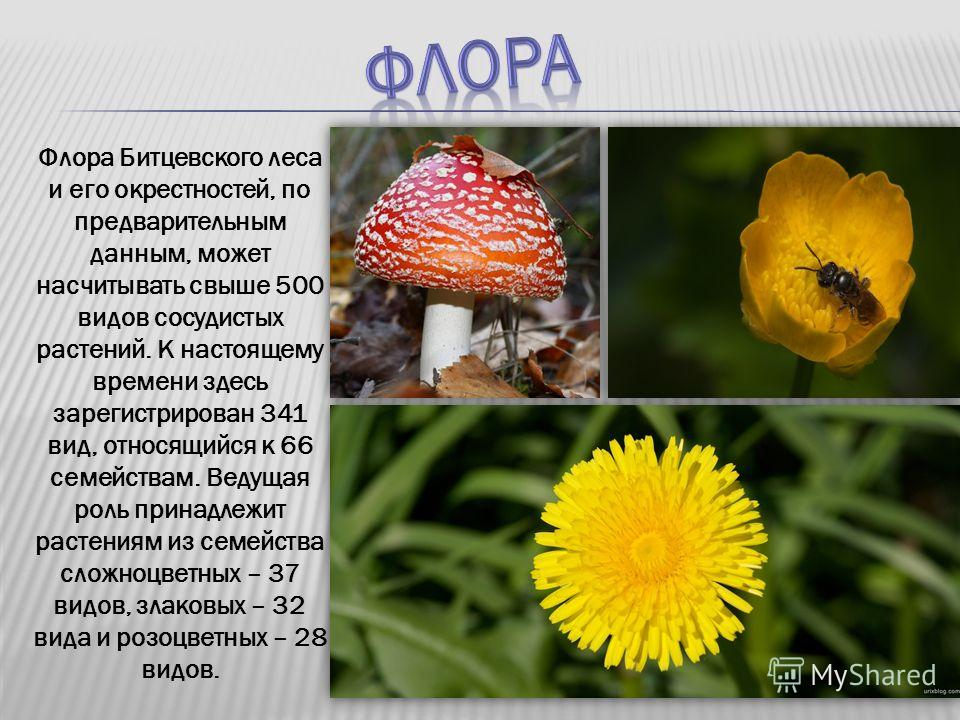 Флора Битцевского леса и его окрестностей, по предварительным данным, может насчитывать свыше 500 видов сосудистых растений. К настоящему времени здесь зарегистрирован 341 вид, относящийся к 66 семействам. Ведущая роль принадлежит растениям из семейс
