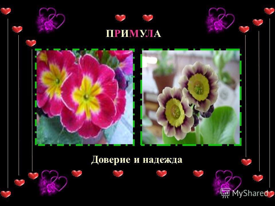 ОРХИДЕЯ любовь, красота ГВОЗДИКА очарование