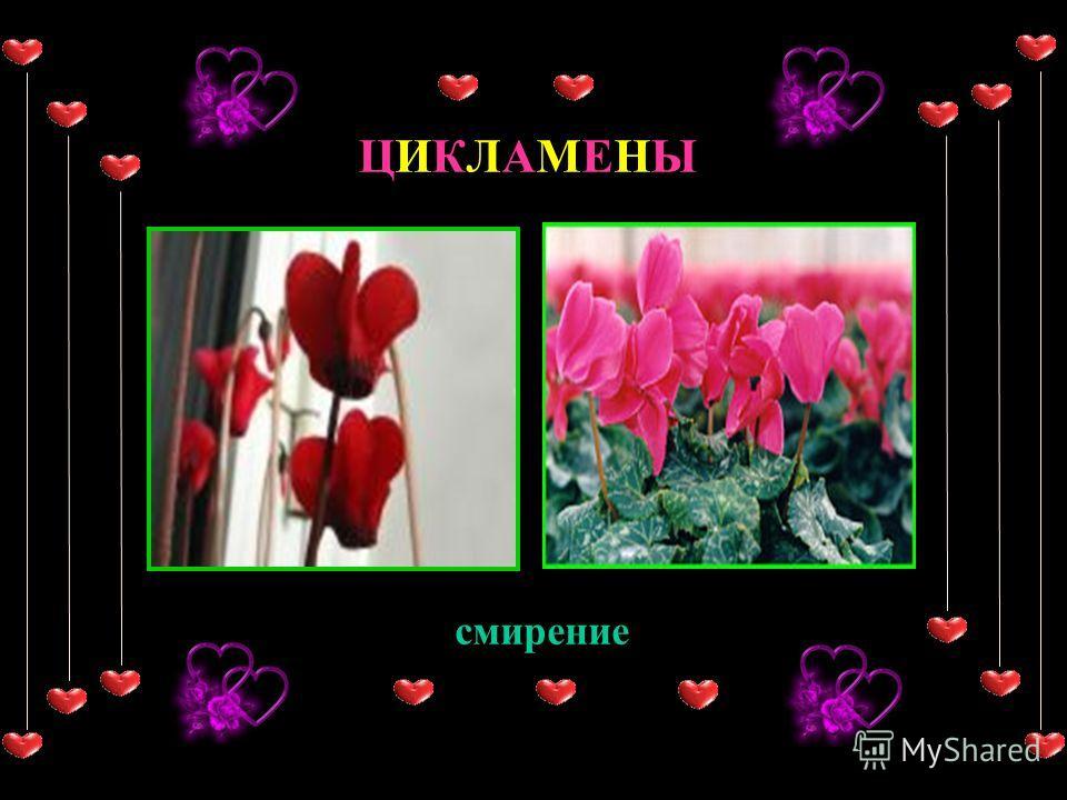 Иногда мы не можем выразить словами то о чем думаем… Цветы могут говорить за нас!!! Даже без слов они говорят... И их значение всегда восхищает...