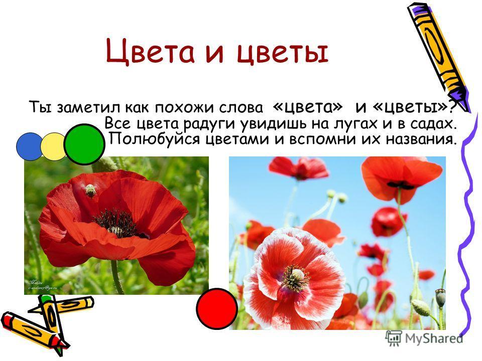 Цвета и цветы Ты заметил как похожи слова «цвета» и «цветы»? Все цвета радуги увидишь на лугах и в садах. Полюбуйся цветами и вспомни их названия.