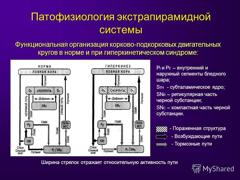 6 Патофизиология экстрапирамидной системы Функциональная организация корково-подкорковых двигательных кругов в норме и при гиперкинетическом синдроме: P I и P E – внутренний и наружный сегменты бледного шара; S TH - субталамическое ядро; SN R – ретик