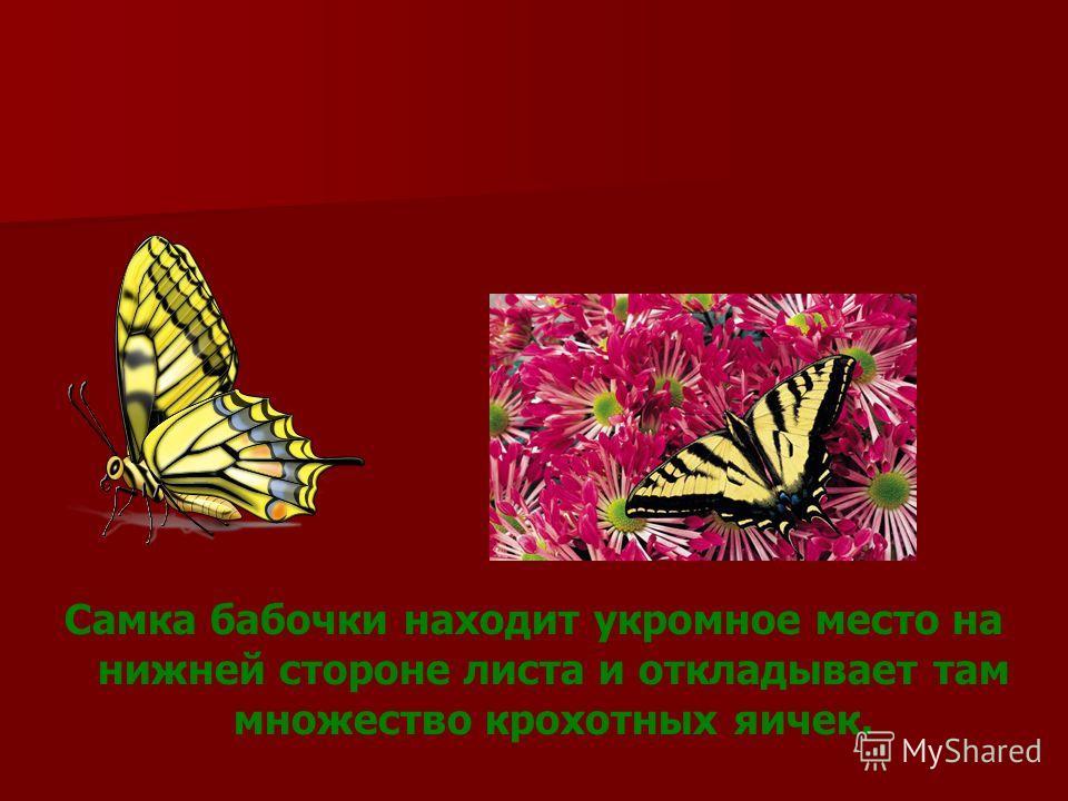 Вы видели когда - нибудь бабочку? Ну, конечно, видели! А хотите узнать, как появляются эти удивительные создания?