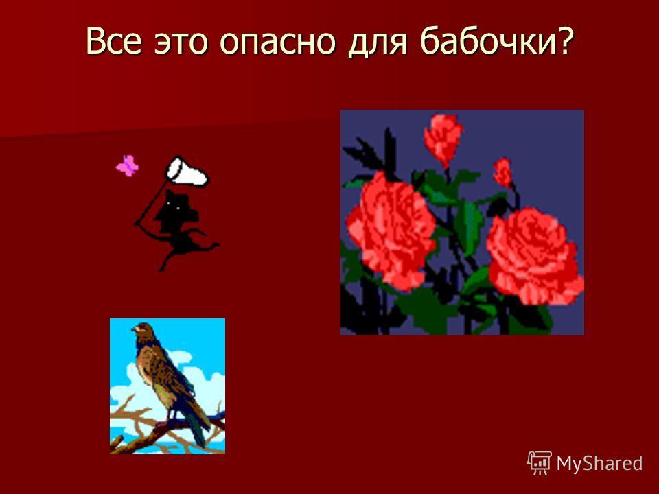 Опасности бабочек!!!!! Но у бабочек есть и опасности. Например: человек, птицы. И бабочки от них умирают! Но у бабочек есть и опасности. Например: человек, птицы. И бабочки от них умирают!