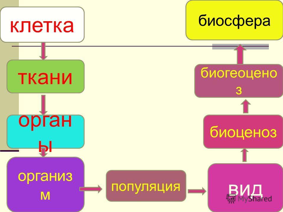 клетка орган ы популяция вид организ м ткани биоценоз биогеоцено з биосфера