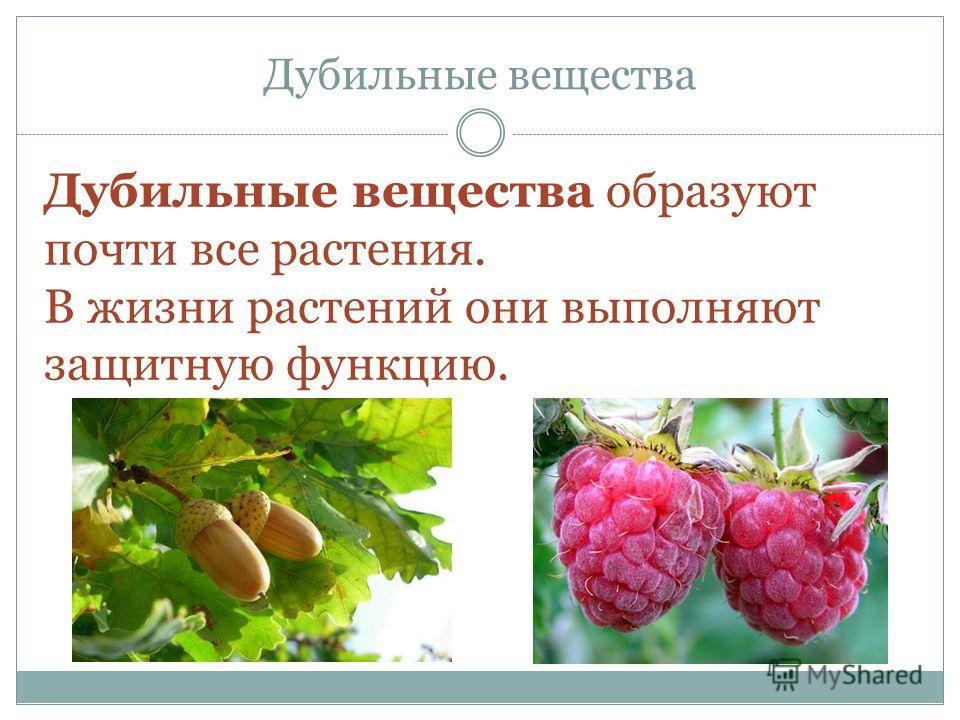 Дубильные вещества Дубильные вещества образуют почти все растения. В жизни растений они выполняют защитную функцию.