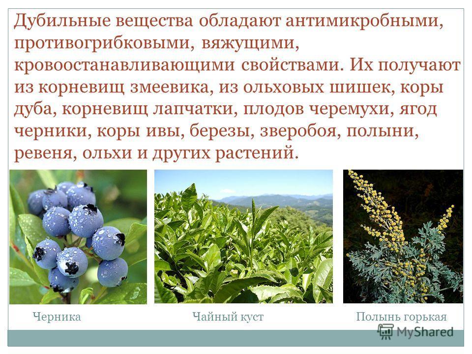 Дубильные вещества обладают антимикробными, противогрибковыми, вяжущими, кровоостанавливающими свойствами. Их получают из корневищ змеевика, из ольховых шишек, коры дуба, корневищ лапчатки, плодов черемухи, ягод черники, коры ивы, березы, зверобоя, п