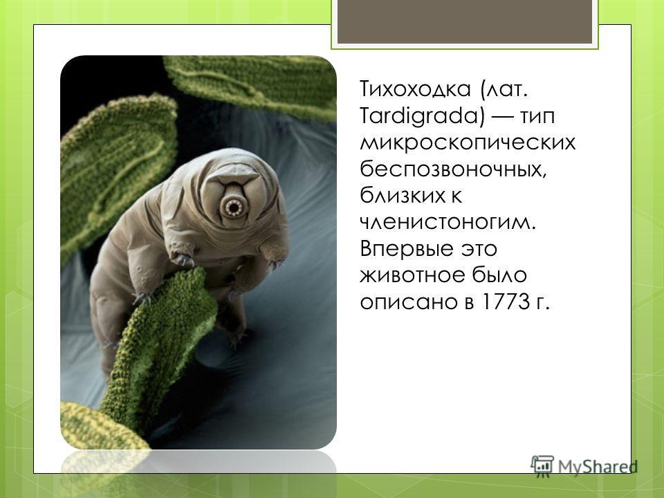 Тихоходка (лат. Tardigrada) тип микроскопических беспозвоночных, близких к членистоногим. Впервые это животное было описано в 1773 г.