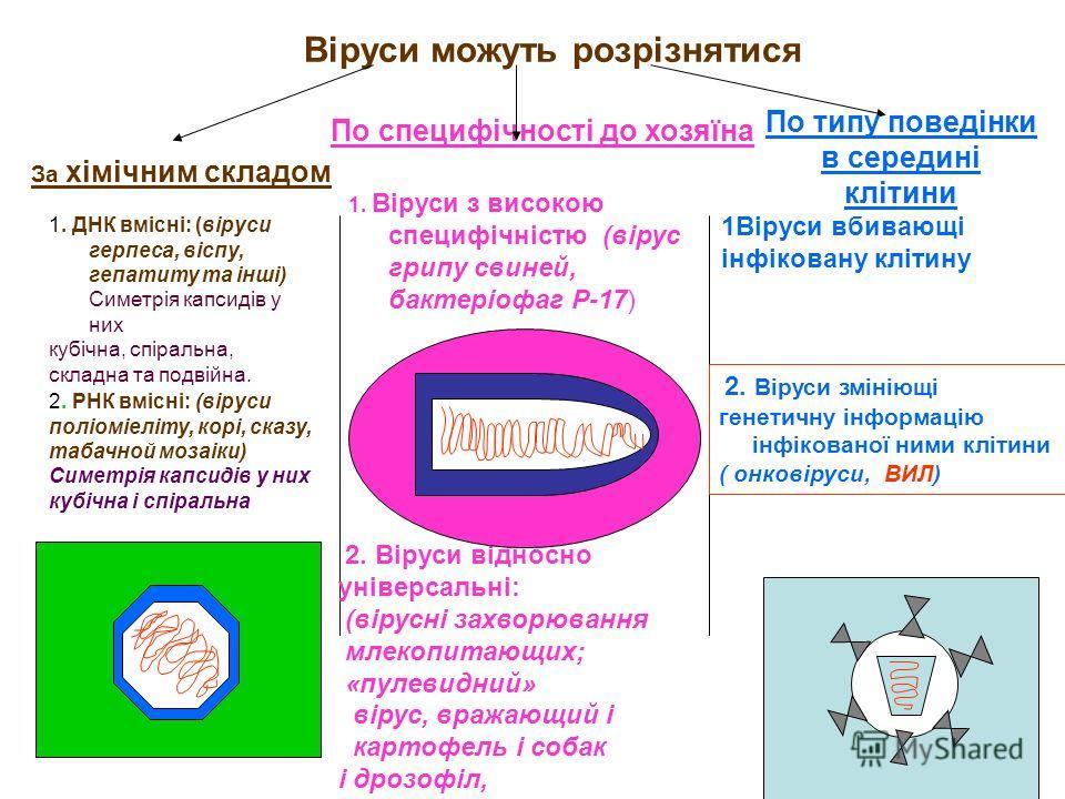 Віруси можуть розрізнятися По специфічності до хозяїна 1. Віруси з високою специфічністю (вірус грипу свиней, бактеріофаг Р-17) 2. Віруси відносно уні