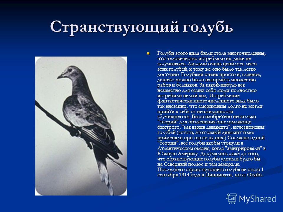 Странствующий голубь Голуби этого вида были столь многочисленны, что человечество истребляло их, даже не задумываясь. Людьми очень ценилось мясо этих голубей, к тому же оно было так легко доступно. Голубями очень просто и, главное, дешево можно было