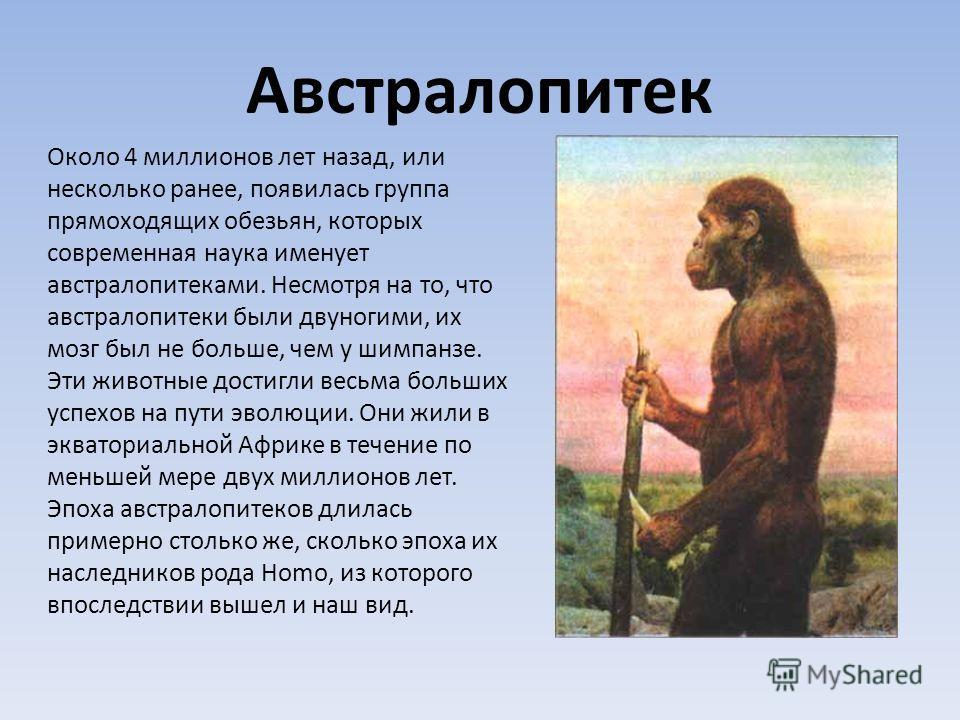 Около 4 миллионов лет назад, или несколько ранее, появилась группа прямоходящих обезьян, которых современная наука именует австралопитеками. Несмотря на то, что австралопитеки были двуногими, их мозг был не больше, чем у шимпанзе. Эти животные достиг