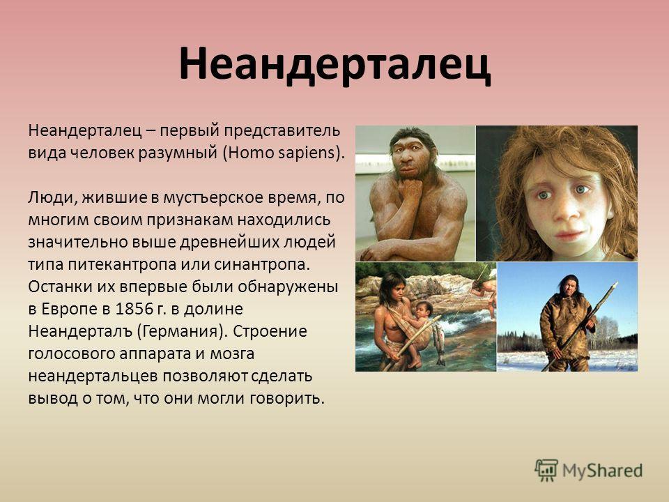 Неандерталец – первый представитель вида человек разумный (Homo sapiens). Люди, жившие в мустъерское время, по многим своим признакам находились значительно выше древнейших людей типа питекантропа или синантропа. Останки их впервые были обнаружены в