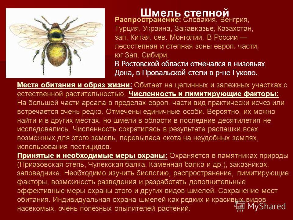 Красная книга Красная книга Ростовской области Ростовской области о животных о животных