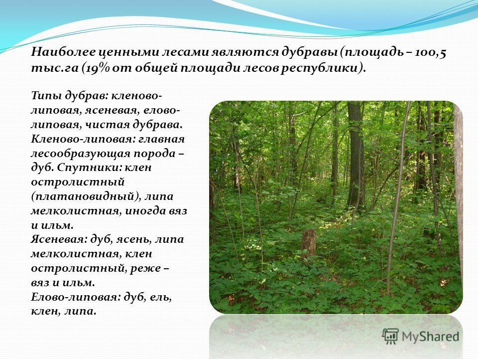 Наиболее ценными лесами являются дубравы (площадь – 100,5 тыс.га (19% от общей площади лесов республики). Типы дубрав: кленово- липовая, ясеневая, елово- липовая, чистая дубрава. Кленово-липовая: главная лесообразующая порода – дуб. Спутники: клен ос