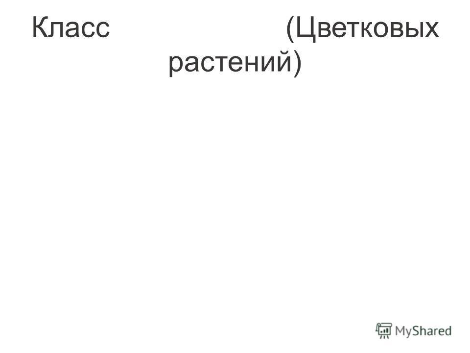 Класс (Цветковых растений)