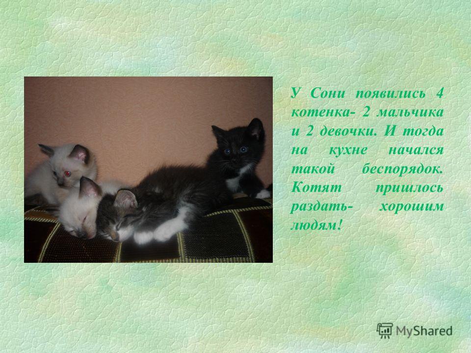 §В нашей семье есть общая любимица – кошка, которую зовут Соня. Ее назвали Соней, потому что она очень любила спать. Она появилась в нашем доме крошечным котёнком.