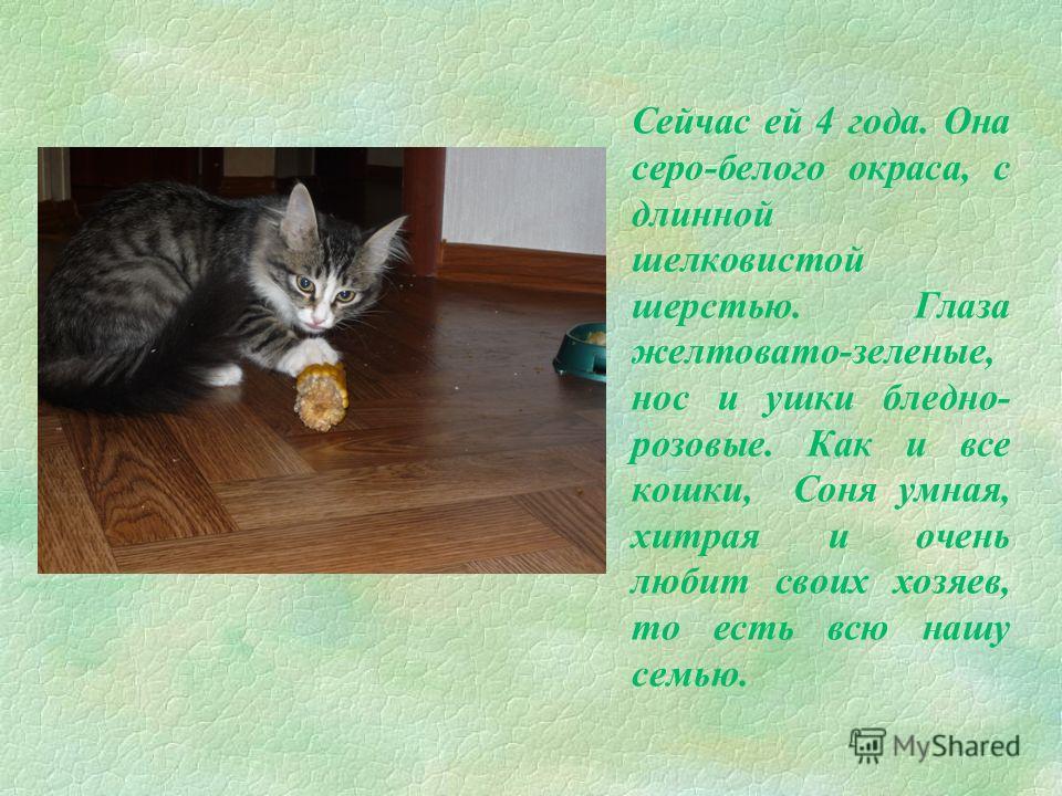 У Сони появились 4 котенка- 2 мальчика и 2 девочки. И тогда на кухне начался такой беспорядок. Котят пришлось раздать- хорошим людям!