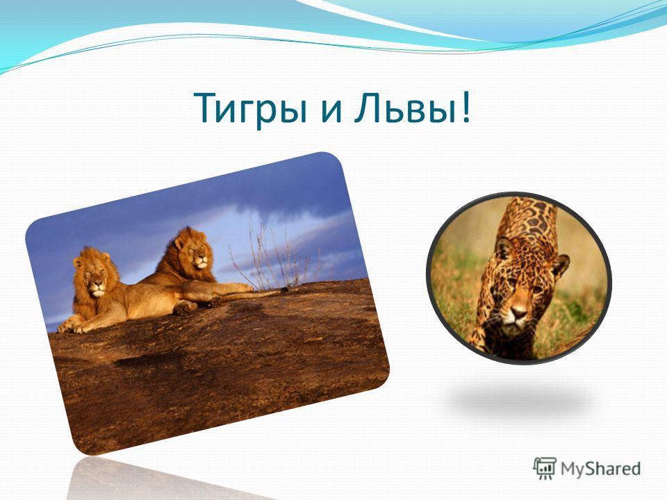 Тигры и Львы!