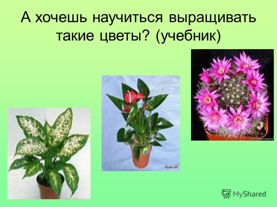 А хочешь научиться выращивать такие цветы ? ( учебник )