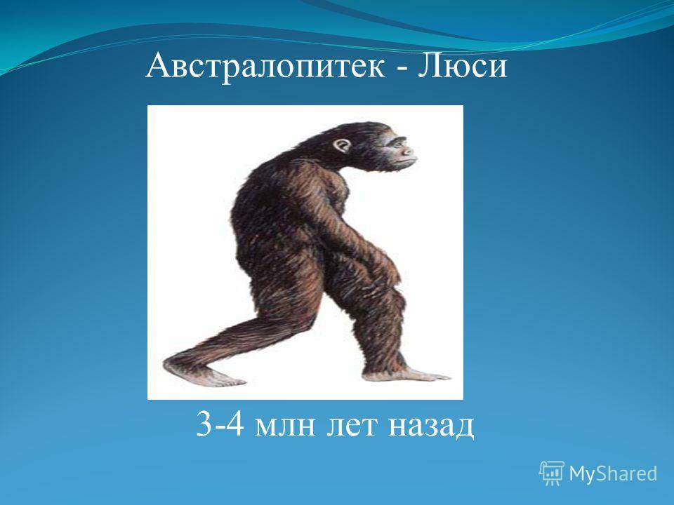 Австралопитек - Люси 3-4 млн лет назад