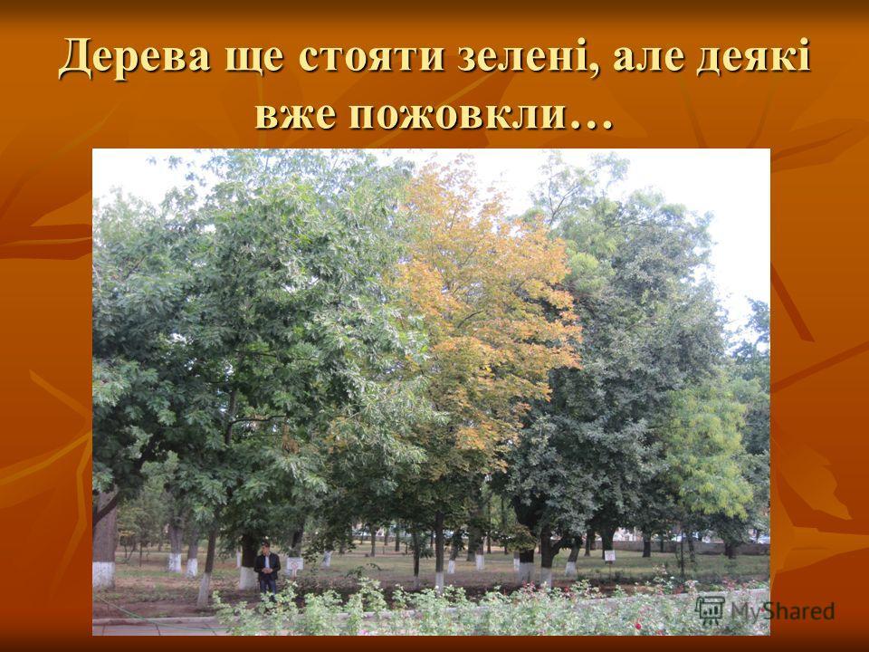 Дерева ще стояти зелені, але деякі вже пожовкли…