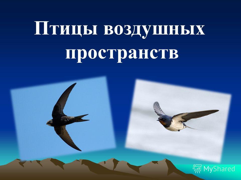 Птицы воздушных пространств