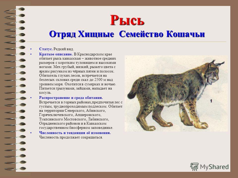 Презентация на тему Красная книга Кубани ЖИВОТНЫЕ РЫБЫ И  4 Рысь