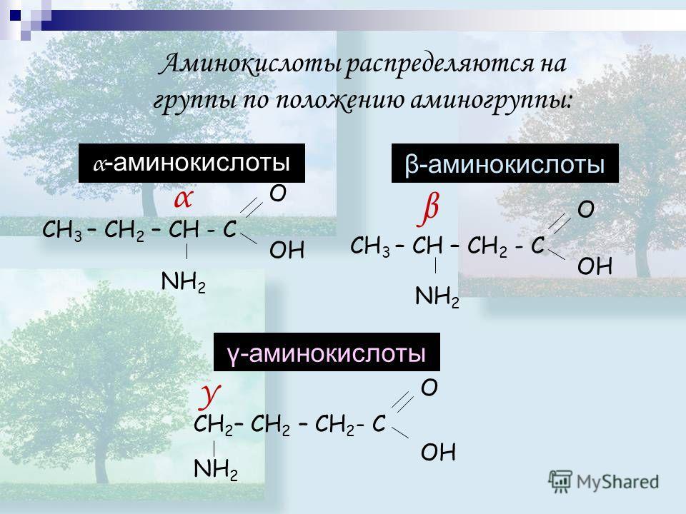 Аминокислоты распределяются на группы по положению аминогруппы: γ-аминокислоты α -аминокислоты CH 3 – CH 2 – CH - C O OH NH 2 α β-аминокислоты OH CH 3 – CH – CH 2 - C O NH 2 β CH 2 – CH 2 – CH 2 - C O NH 2 γ OH
