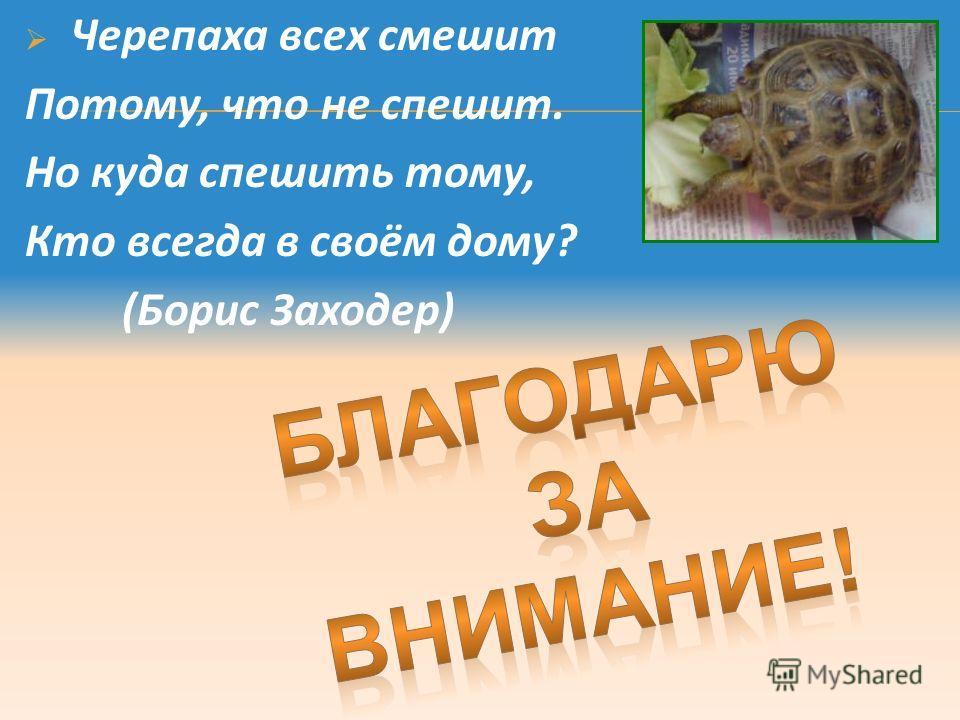 Черепаха всех смешит Потому, что не спешит. Но куда спешить тому, Кто всегда в своём дому? (Борис Заходер)