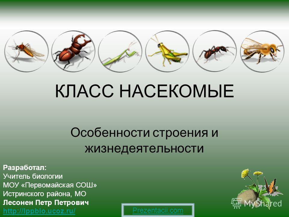 Класс насекомые особенности строения