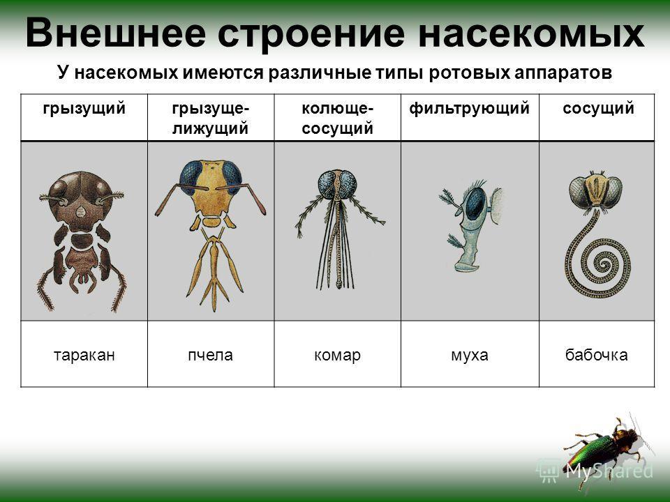 Внешнее строение насекомых У насекомых имеются различные типы ротовых аппаратов грызущийгрызуще- лижущий колюще- сосущий фильтрующий сосущий тараканпчелакомармухабабочка