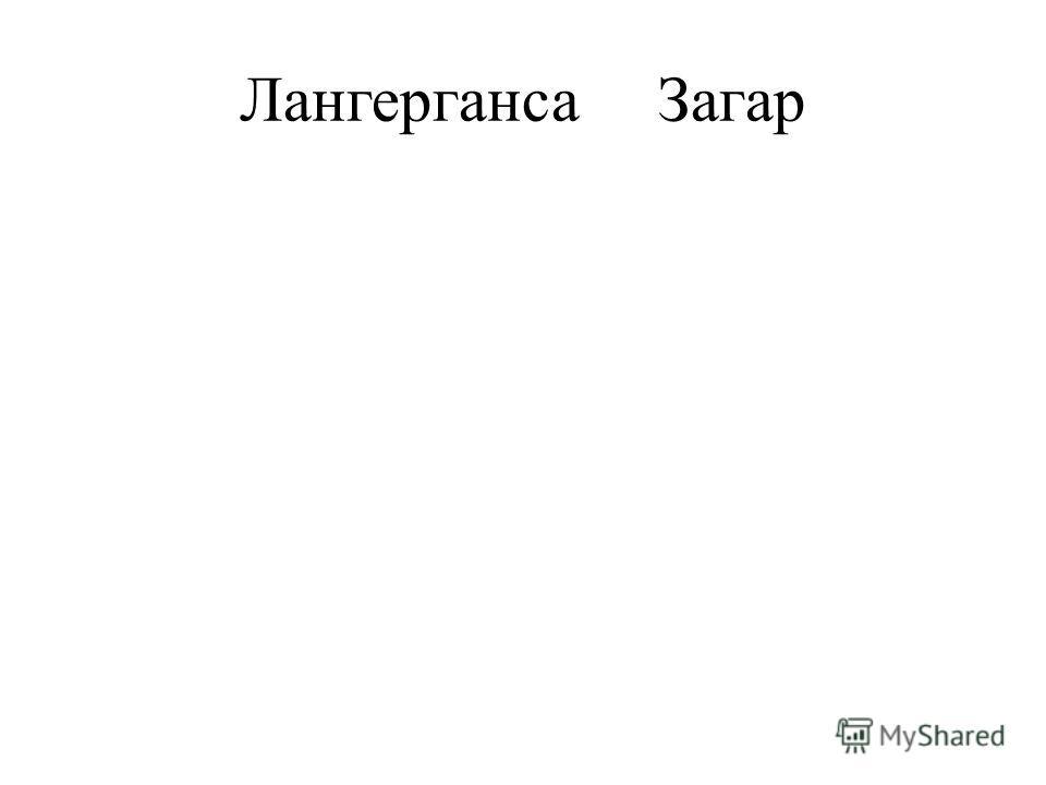 ЛангергансаЗагар