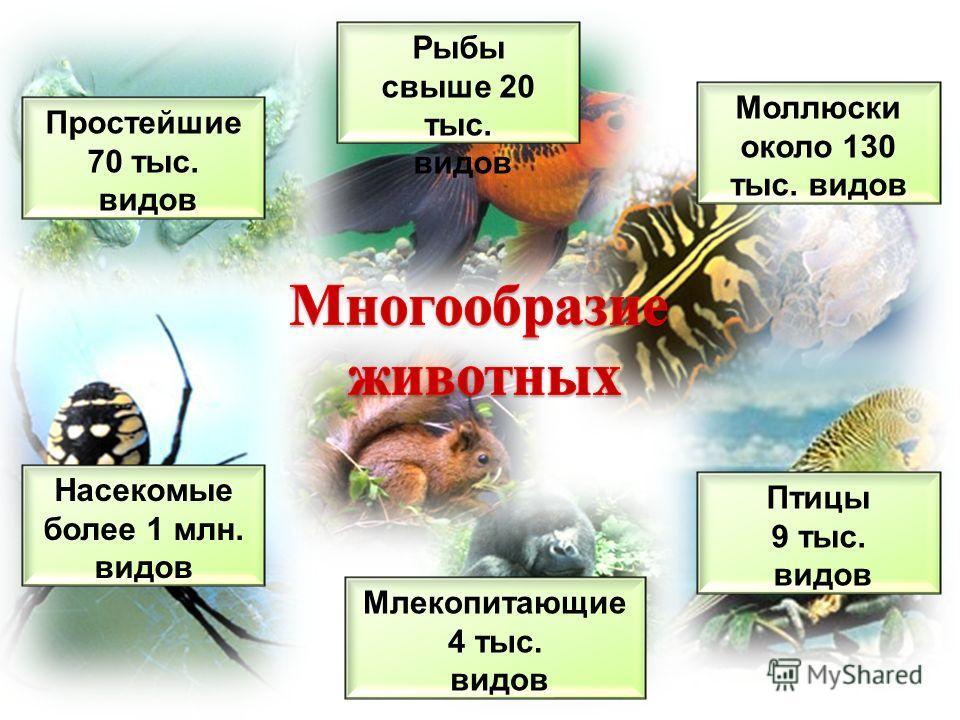 Простейшие 70 тыс. видов Моллюски около 130 тыс. видов Насекомые более 1 млн. видов Рыбы свыше 20 тыс. видов Птицы 9 тыс. видов Млекопитающие 4 тыс. видов