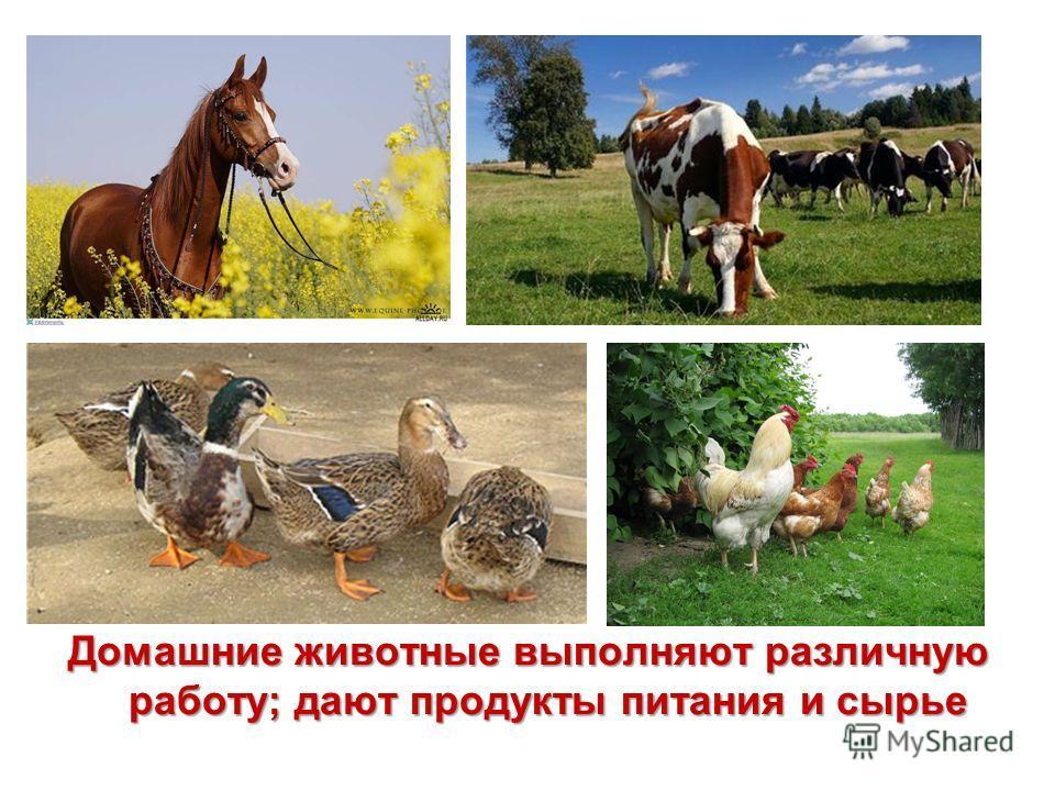 Домашние животные выполняют различную работу; дают продукты питания и сырье