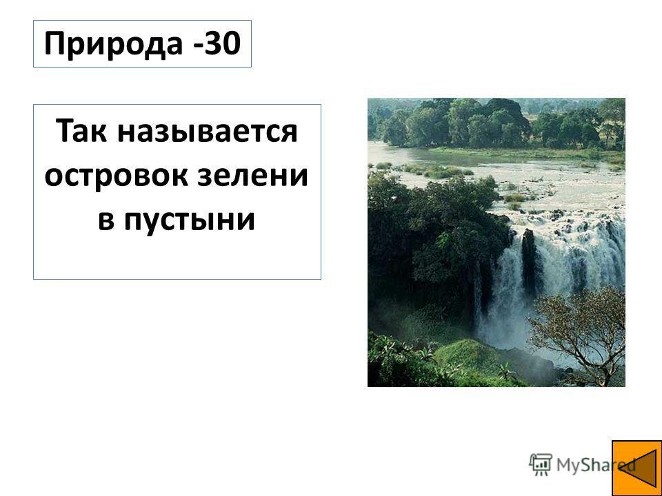 Природа -30 Так называется островок зелени в пустыни