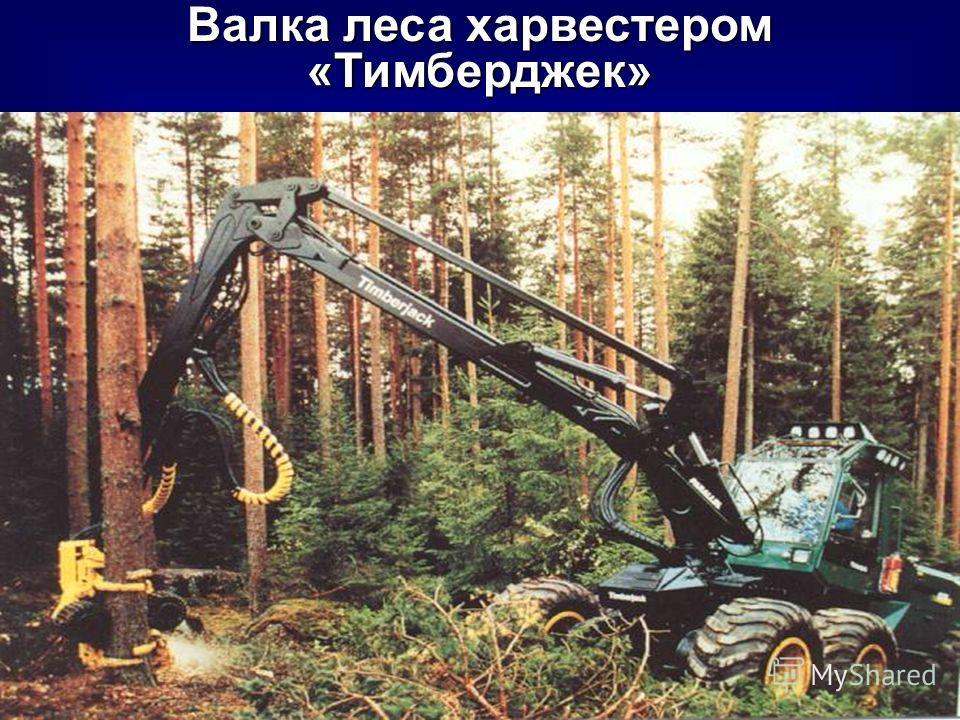 Валка леса харвестером «Тимберджек»