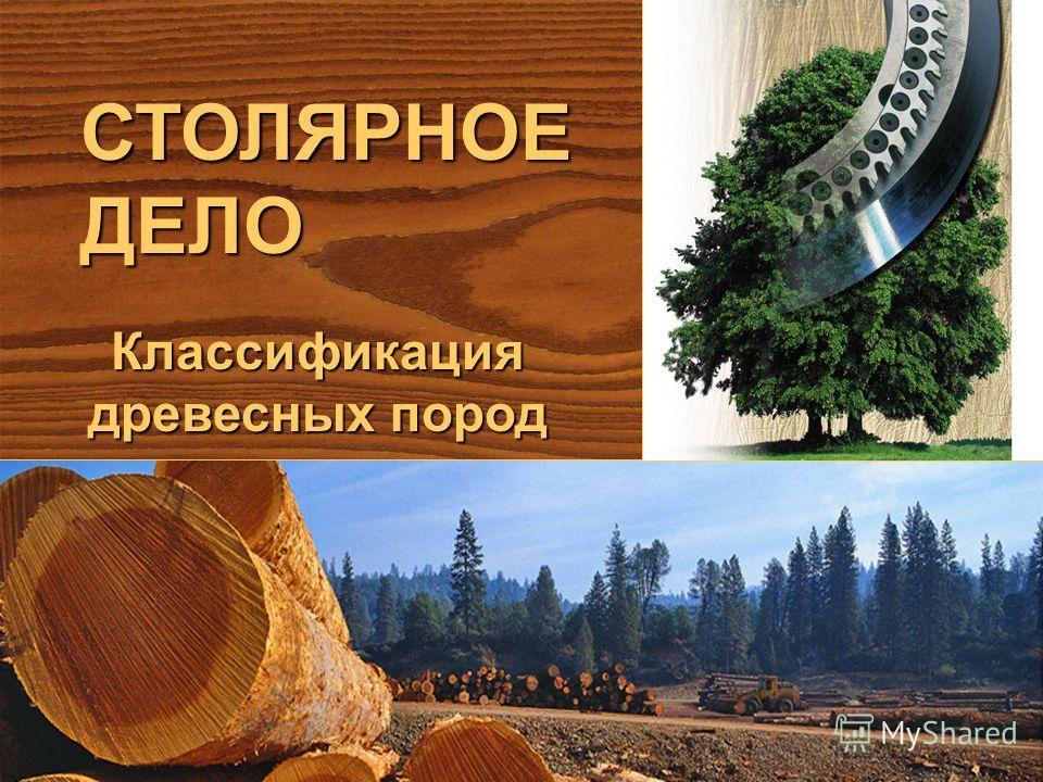 СТОЛЯРНОЕДЕЛО Классификация древесных пород